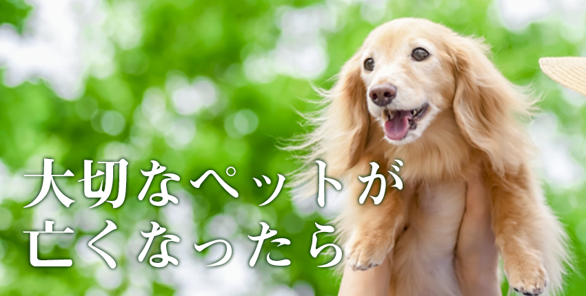 大切なペットのお墓探し:火葬から納骨までの流れ【横浜市の場合】